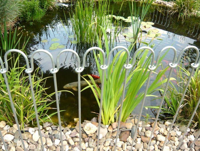 Die Karpfen und die Goldfische stört der Zaun um den Teich nicht.