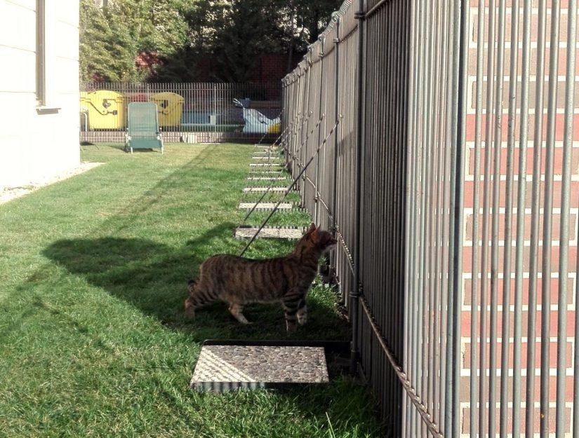 Die alte Katze kann wegen dem Zaun nicht mehr auf die Straße laufen.