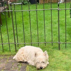 Die Tür ist 66 cm breit. Unser Hund läuft nicht mehr weg.