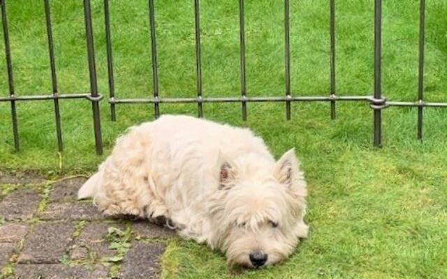 Kleiner Gartenzaun für meinen Hund