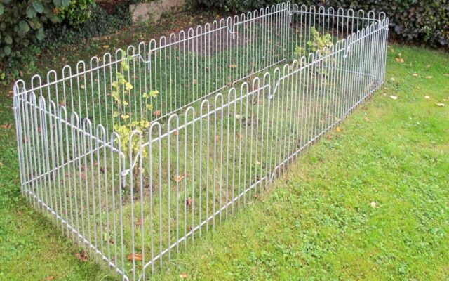 Gitter als Schutz vor den Johannisbeersträuchern