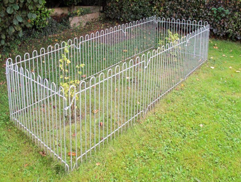 Schutz der Sträucher vor dem Hund mit einem auf dem Boden aufgestellten Zaun.