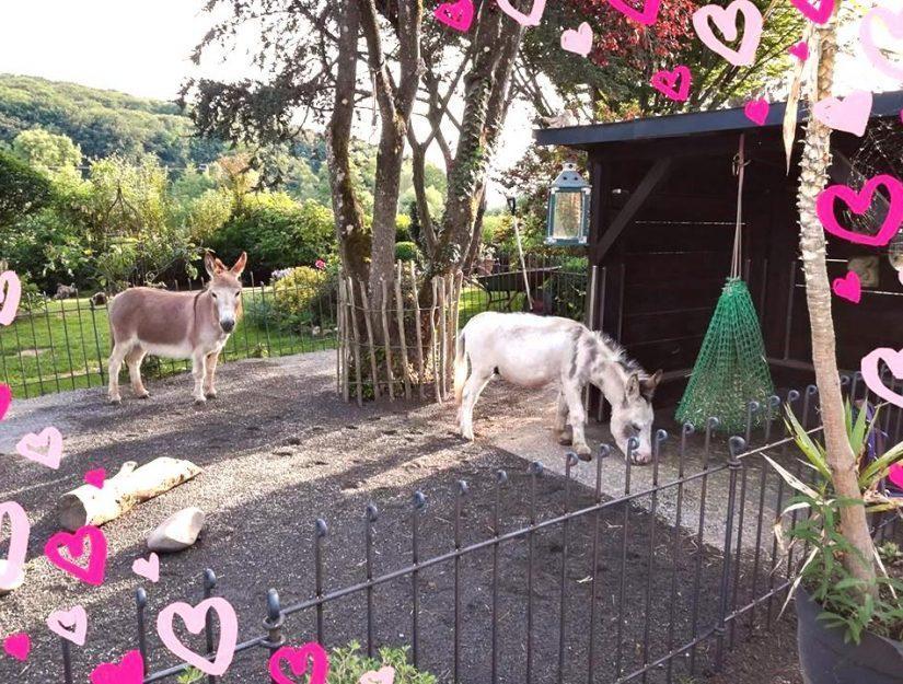 Clôture utilisée comme enclos pour les petits ânes.