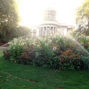 Im Park gibt es ein Bewässerungssystem, welches über eine App ausgelöst werden kann.
