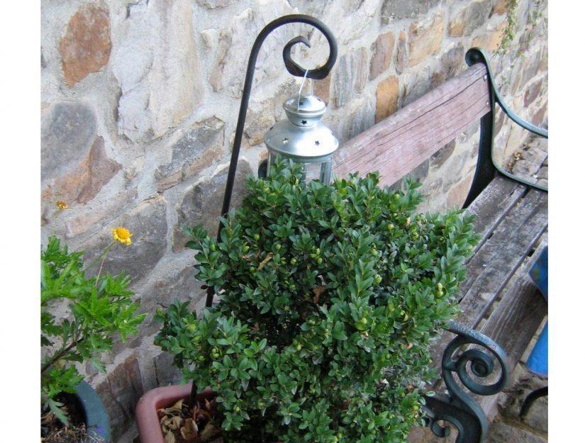 Den Pflanzstab Schnörkel in roh kann man auch als Laternenstab einsetzen.