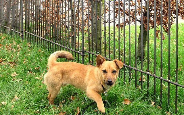 Zaun als Hunde Auslauf im Garten