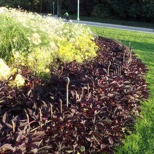 Die Beetzäune sind fast ganz in den Blumen und Blättern eingewachsen