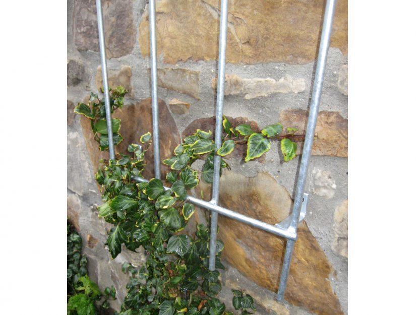 Unsere Wand-Rankgitter sind sehr stabil und können Jahrzehnte schwere Pflanzen an Ihrer Fassade halten.