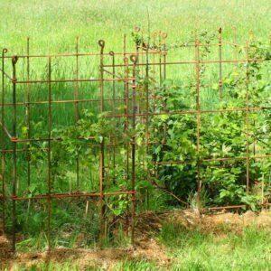 Eisenspaliere um ein Beet mit Brombeeren, Himbeeren und Weinpflanzen gesteckt