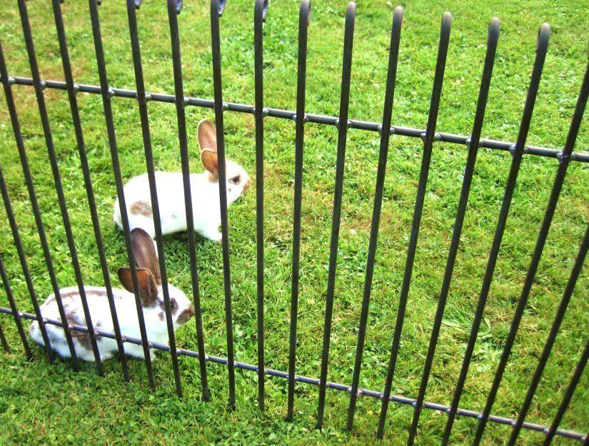 L'écartement entre les barreaux est de 4,3 cm. La clôture brute peut rouiller.