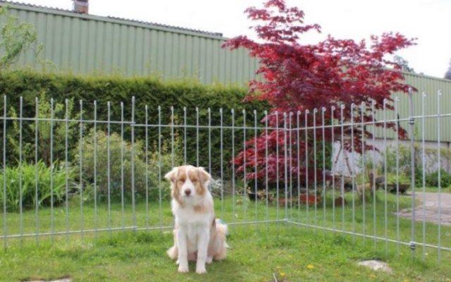 Verzinkter Steckzaun für einen Hund