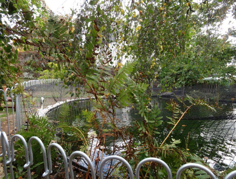 Clôture galvanisée autour de l'étang avec filet de protection contre les hérons.