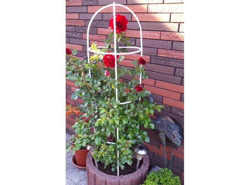 Obélisque peint en blanc par le client avec des roses dans un pot de fleurs.