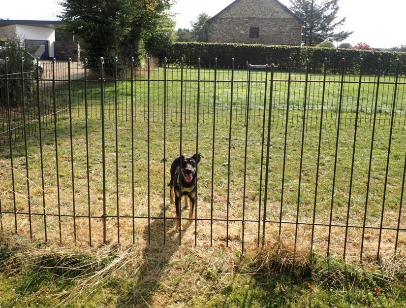 Tür zu einem 145 cm hohen Hundegehege mit Bodenrolle.