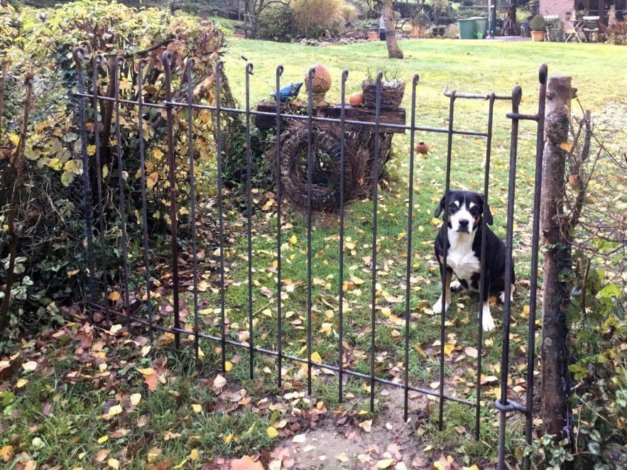 Tür aus rostigem Eisen im Garten für einen Hund
