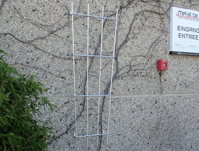 Wandspalier für Kletterpflanzen an unserem Betriebssitz.