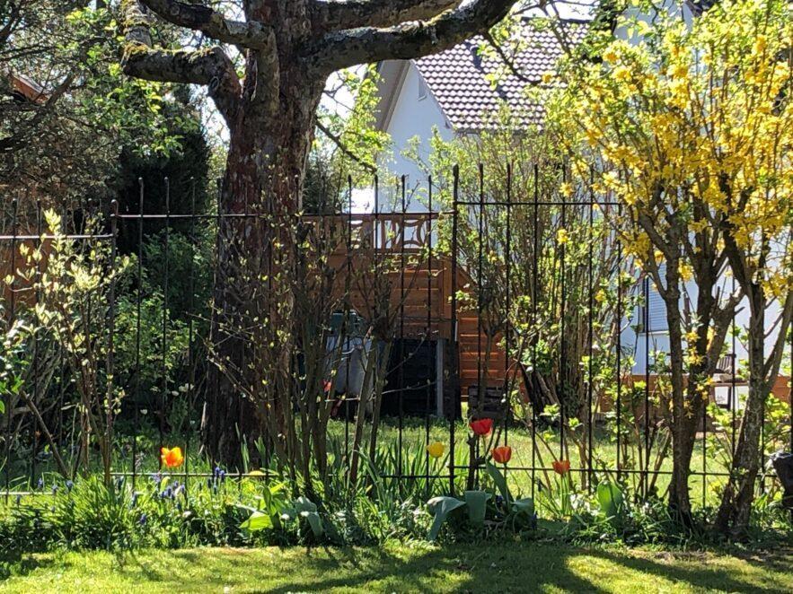 Steckzaun 145 cm hoch vor den Tulpen im Garten