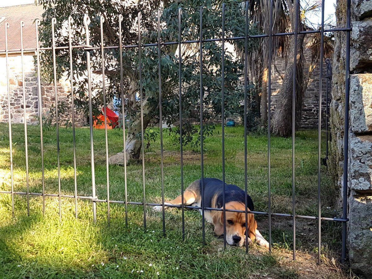 Clôture pour chiens anneau - melabel® clôtures