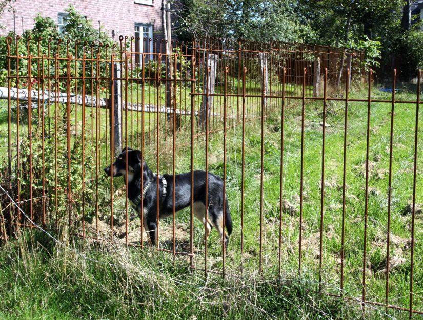 Wartungsarmes Gehege für einen Hund aus rostigem Stahl 145 cm hoch.