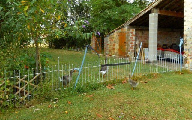 La clôture jardin anneau remplit son rôle, même si l'oison a réussi à passer sous la porte