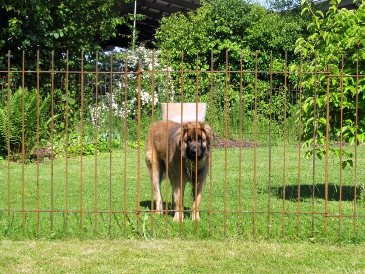 Zaun Als Hunde Auslauf Im Garten Melabel Steckzaune