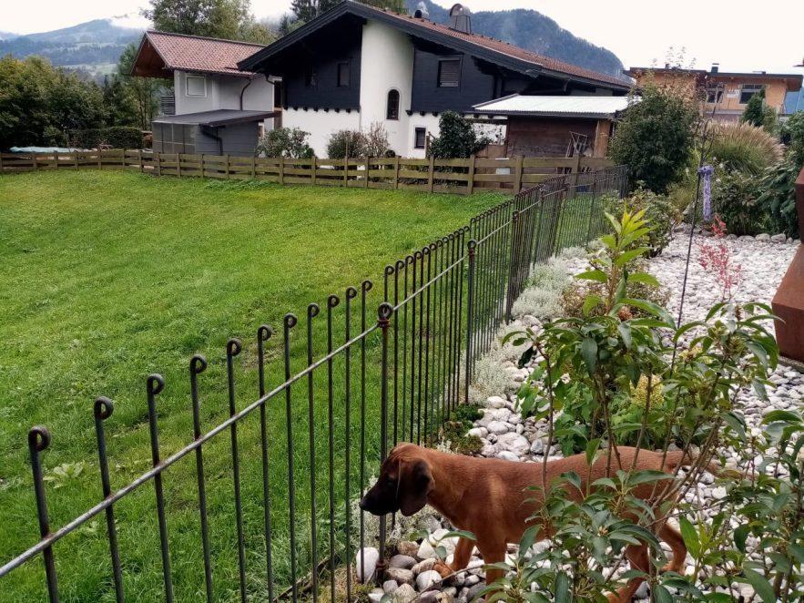 Der Hund schaut traurig durch den Hundezaun, weil er nicht mehr auf die Wiese kann.