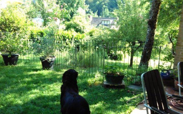 Hund, Familie und Nachbarn sind glücklich