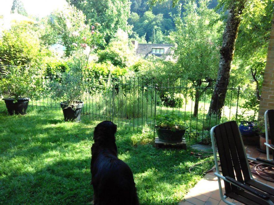Gartenabtrennung für den Hund im Garten