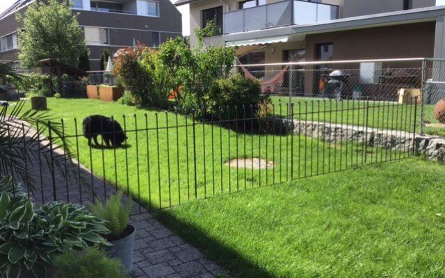 Rasen-Abtrennung für den Hund