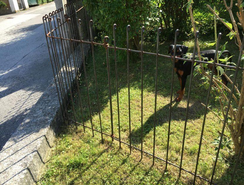 Vom Kunden vor Ort gebogene Zaunecke. Der Zaun lässt sich übers Knie biegen, der Stahl bricht NICHT.